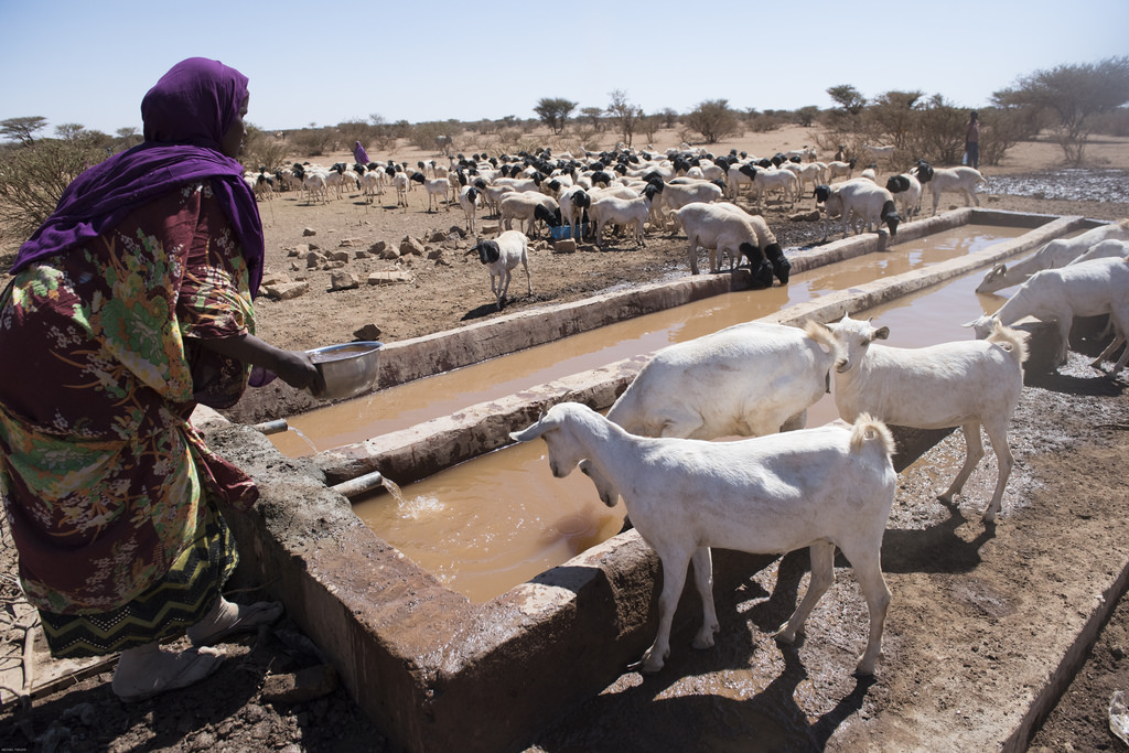 Rehabilitation of Borehole Saves Thousands of Lives and Livestock during Drought